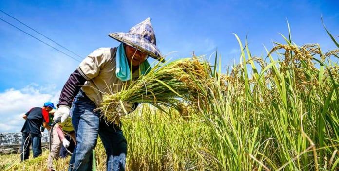 疫情對糧食安全與國土計畫的啟示